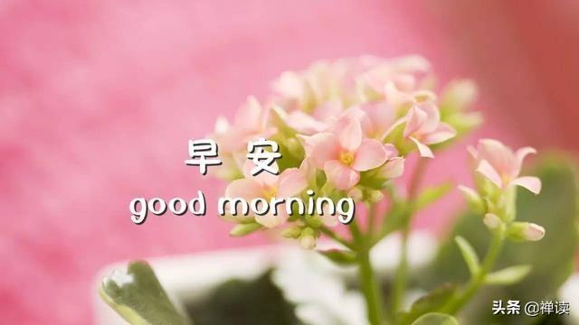 早安心语:微笑继续往前走,做最真实的自己