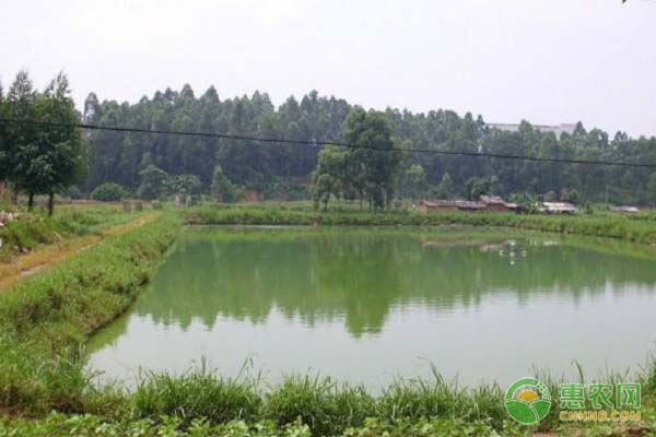 养殖池塘出现水体富营养化有哪些危害?如何防治?