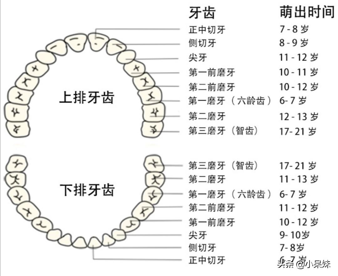 儿童的换牙时间和顺序是什么呢?我们应该注意什么