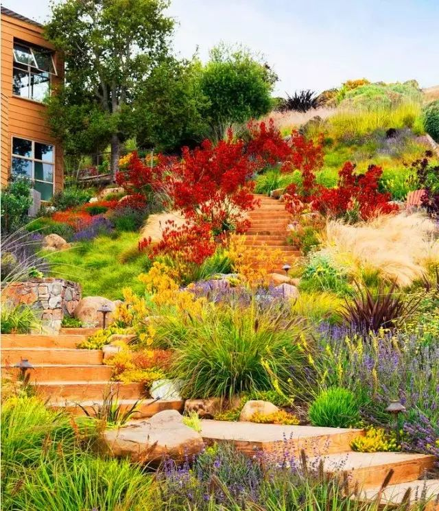 植物 . 造景   花境,究竟有多美