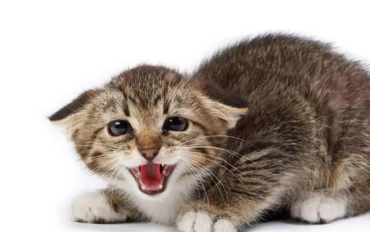 猫的姿态代表了心情,如何读懂猫咪的肢体语言?一篇文章你就明白