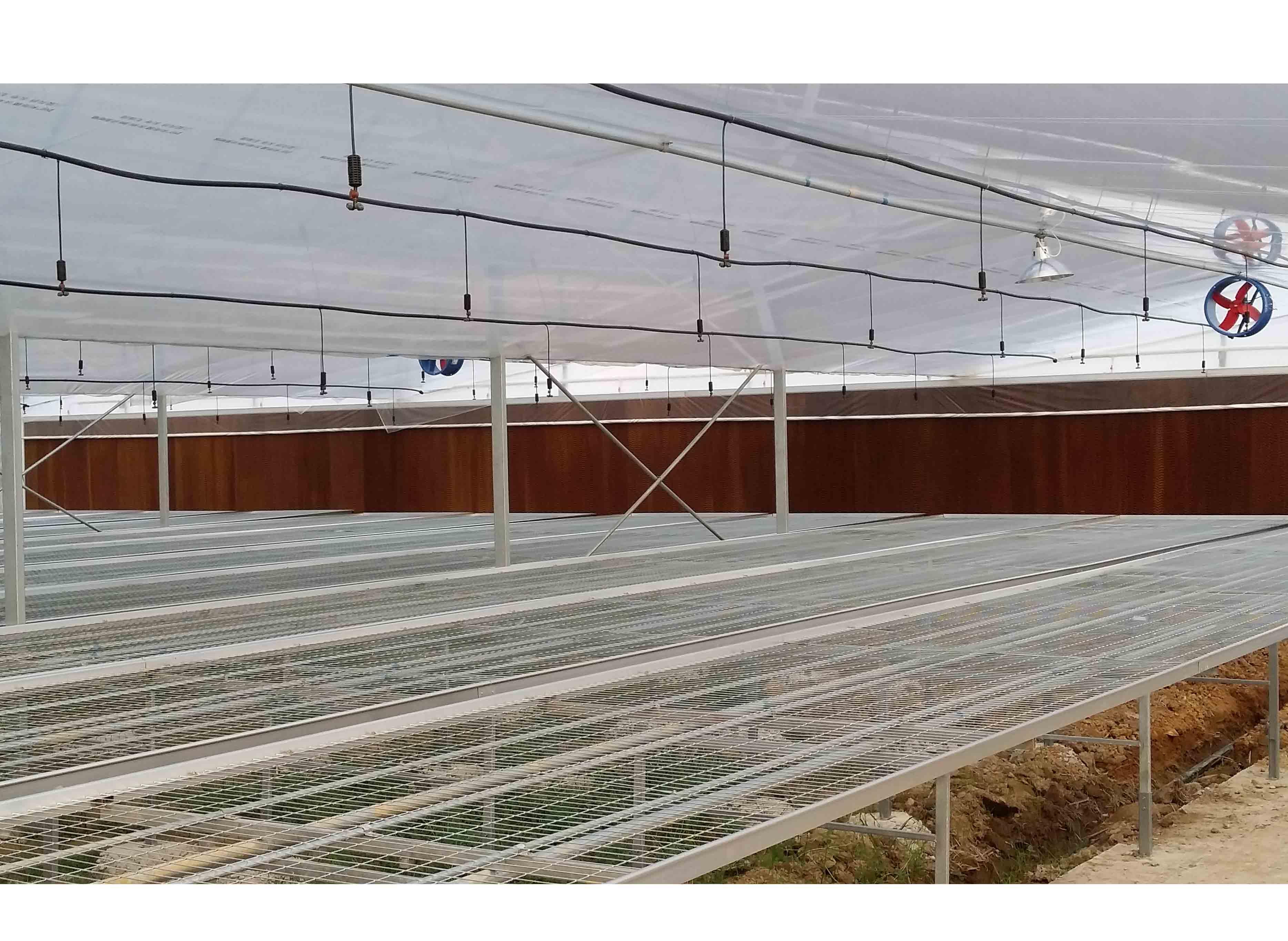 现代薄膜温室大棚五大优点,常用的经济作物都有哪些?