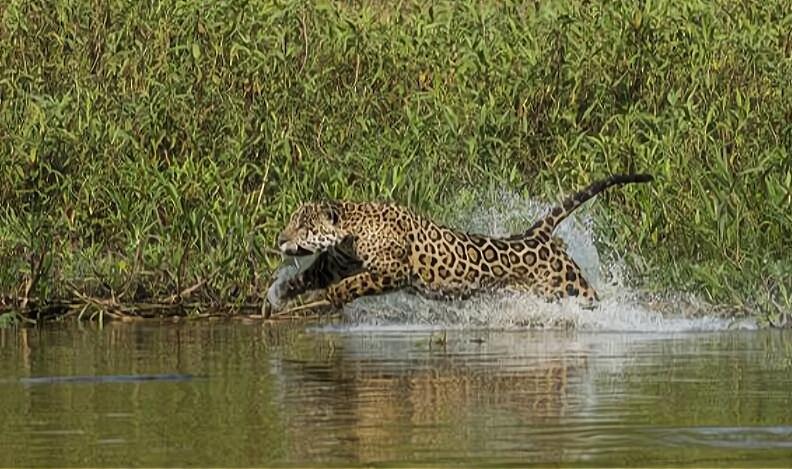 亚马逊河到底有多可怕?为什么人们不敢在亚马逊河中游泳?