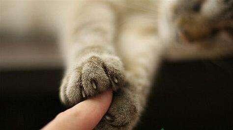 为什么要养猫,没有猫也要云养猫