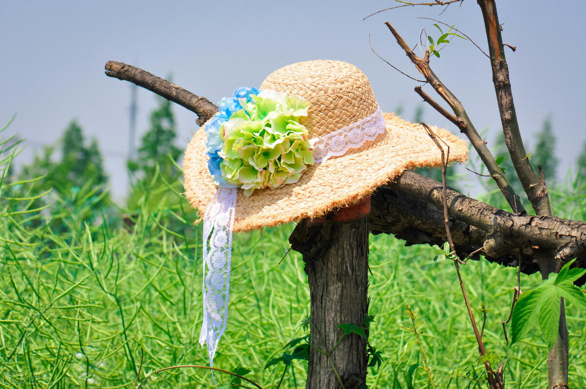 春分:轻风细雨,惜花天气,将春色收入眼,将温暖拥入怀