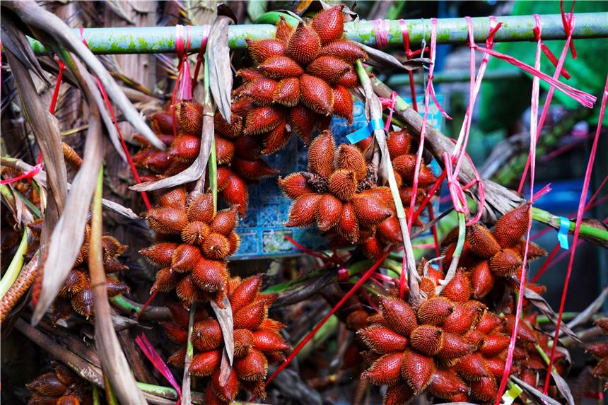 泰國這個果園的老闆,每年收入200萬,一直想把果園開到廣州