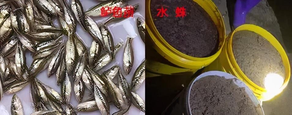 水蛛(水蚤)的高产培育:小苗最适口天然饵料,对水花育苗至关重要