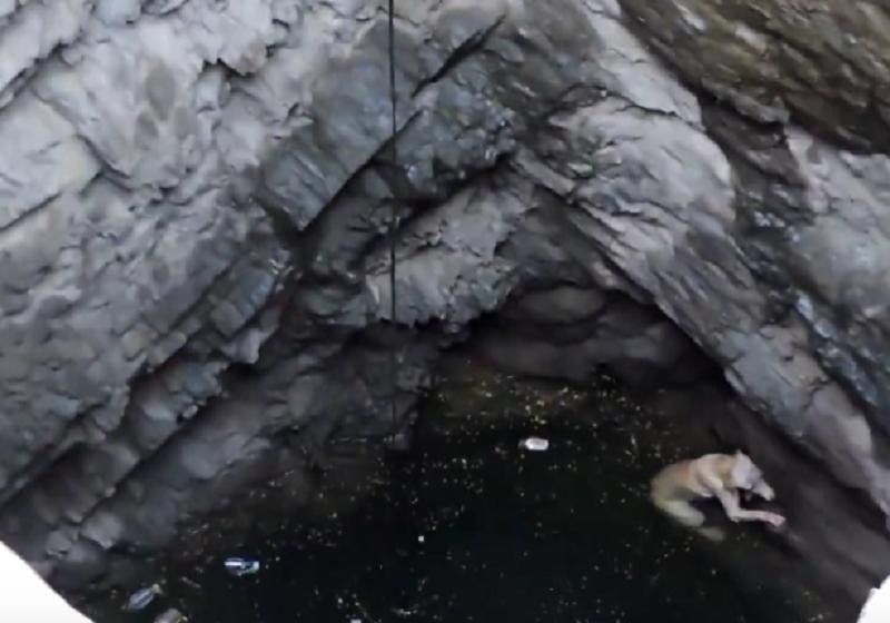 狗狗不慎掉入深水坑,听到人的声音后,它又重燃了生的希望