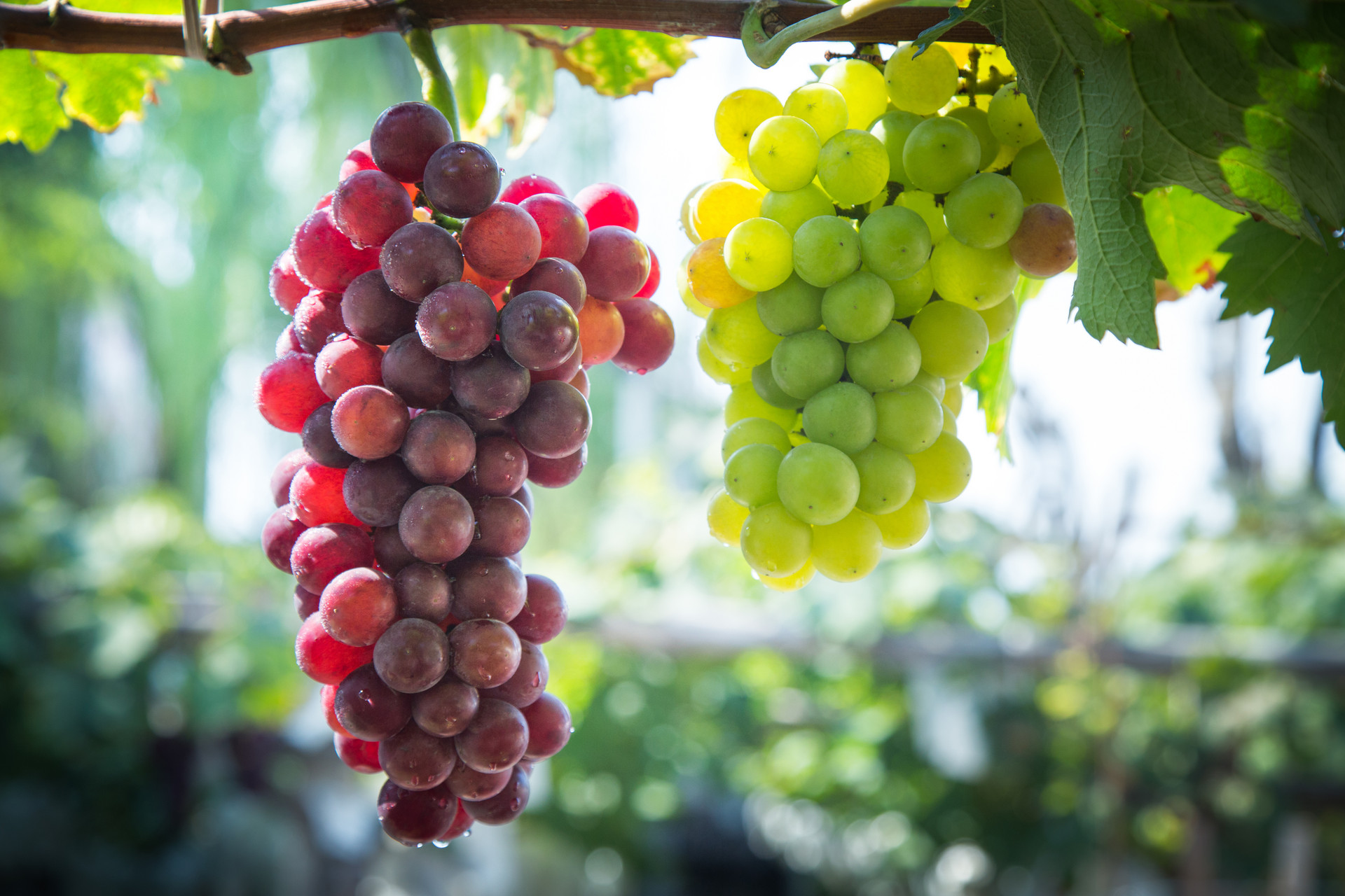 水果怎么吃才好?掌握3个常识,让你吃的营养又放心