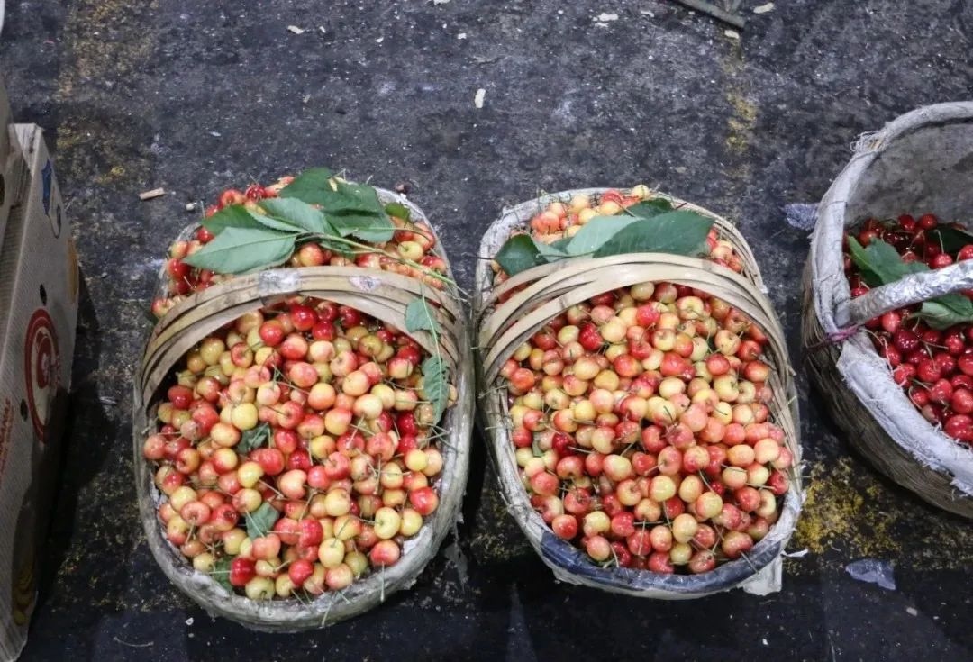 夜探西安最大樱桃市场,2块5起卖!当季才有!