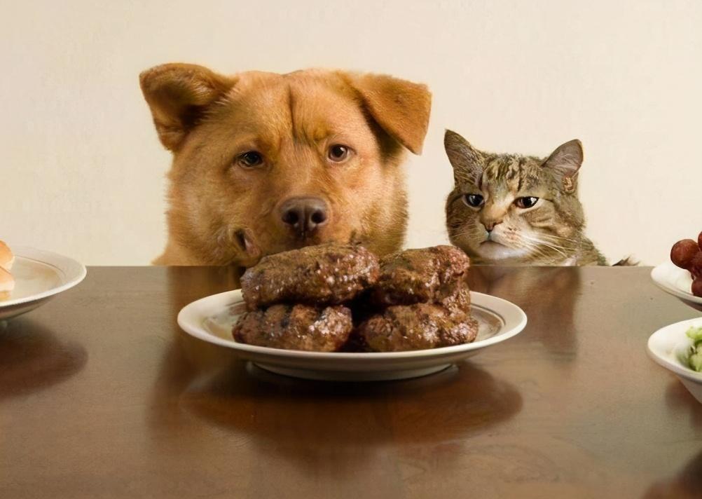 """狗狗的这7种行为,主人最好别""""纵容"""",不然受罪的是你"""