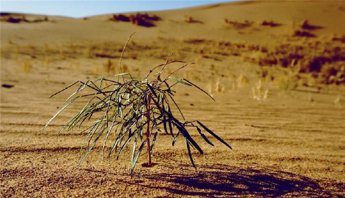 """馬雲耗資打造的""""螞蟻森林"""",如今4年過去了,變成啥樣了呢?"""