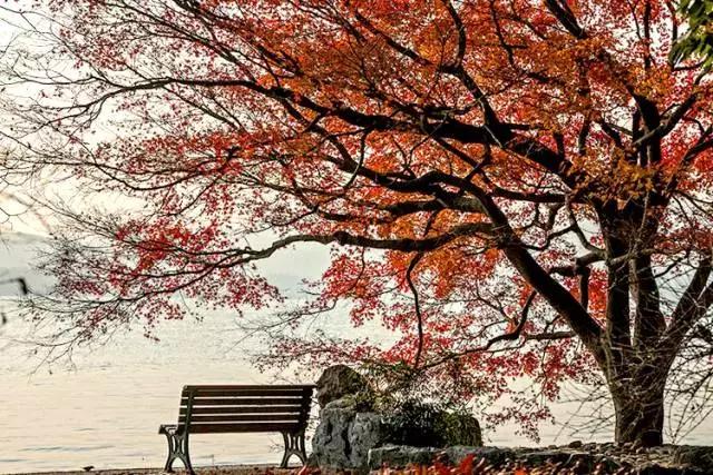 唐诗宋词里的秋天,尽揽山水风月-第3张图片-诗句网