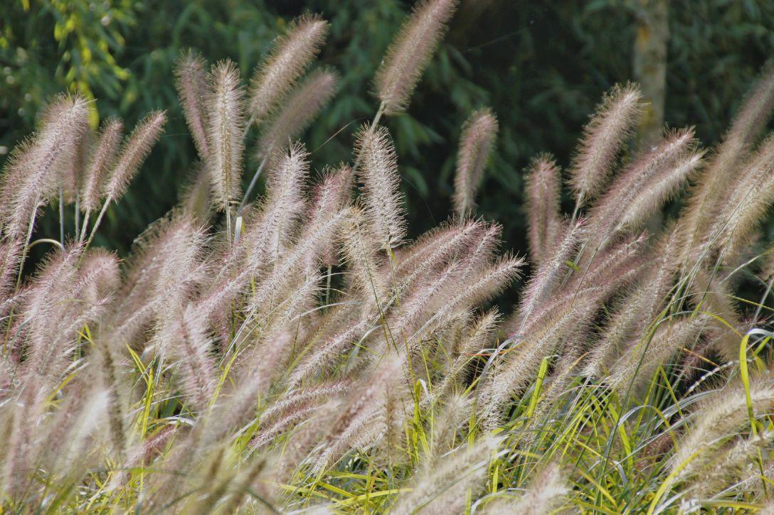 """感受极致运动乐趣、尽情呼吸绿氧,此时世博园里的景色最""""秋天"""""""