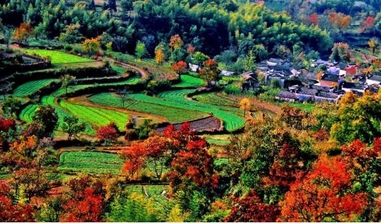 在最美的时间去探寻徽州最美的秋色