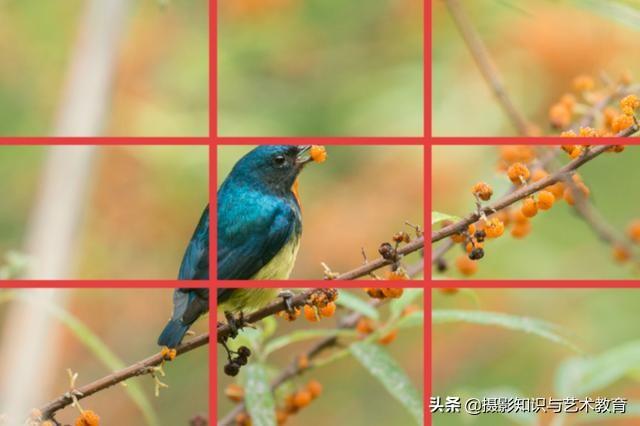 带你看构图的技巧和作用,想拍出好照片,就少不了摄影构图技巧