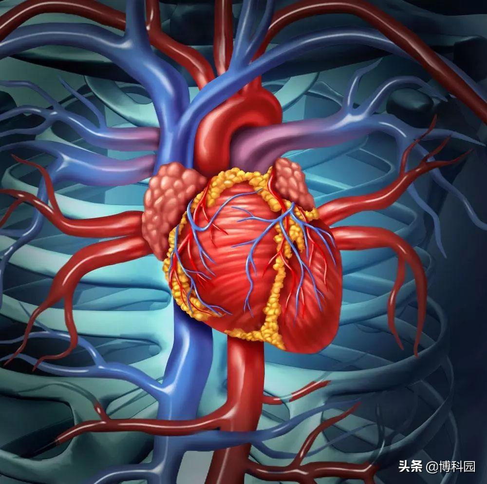 开发出突破性方法研究心肌细胞电信号:利用纳米火山研究心脏细胞