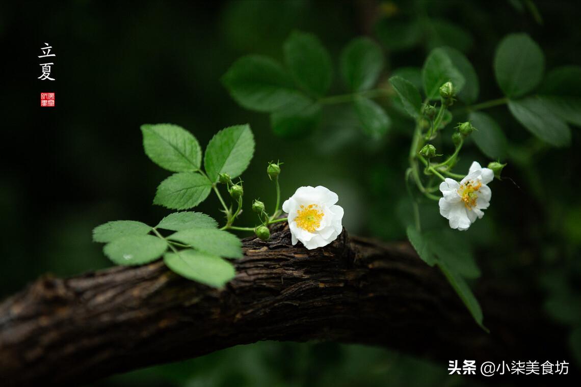 """立夏传统食俗 记得""""吃3食 做2事"""" 老传统不能丢"""