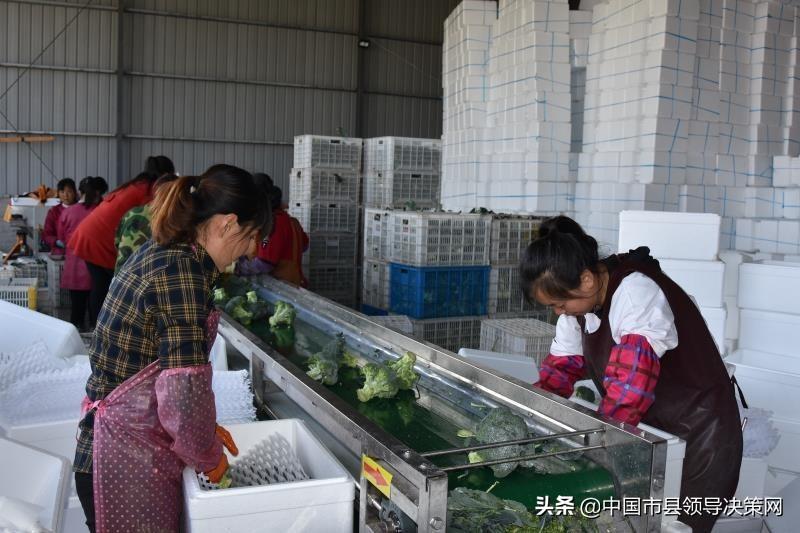 江苏响水县推进产业富民致力乡村振兴