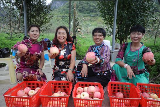 """贵州省长顺县:高钙苹果新品种""""亚洲一号""""上市"""