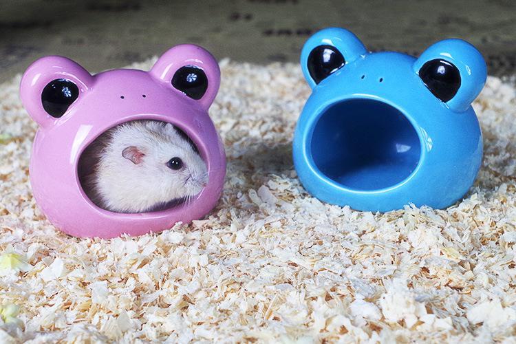 小仓鼠怕什么呢?