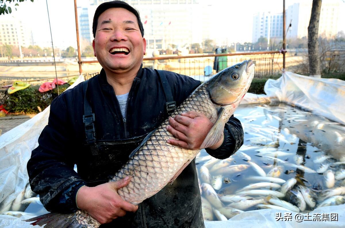 养鱼需要投资多少钱(鱼塘一亩能养殖多少鱼)插图