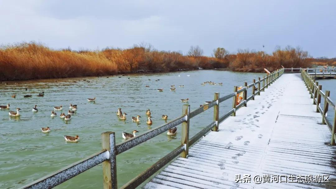 【黄河口生态旅游区】一雪一画卷 一景一世界