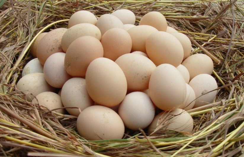 广东这一食品档问题不小,两批鸡蛋均查出氟苯尼考,让人堪忧