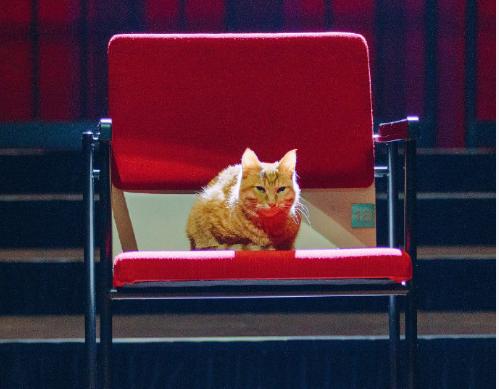 《你好喵室友》定档,郑云龙献唱主题曲,我却羡慕他怀里的猫