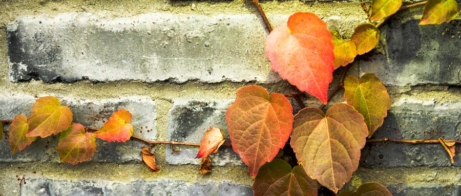 《秋》:独立清醒地思考,是这个时代的稀缺物