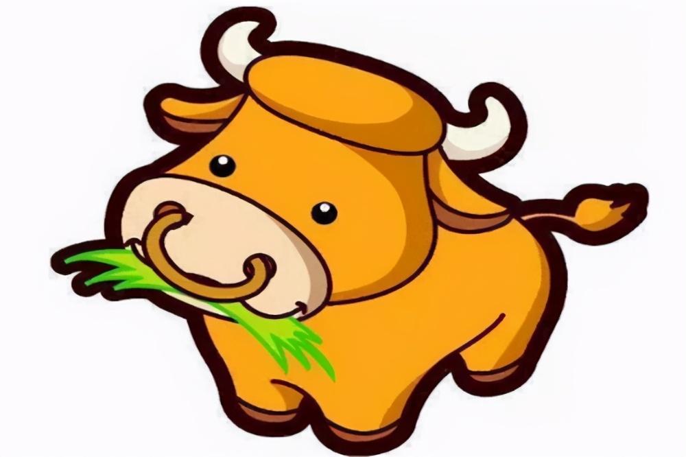 牛肚,毛肚,金钱肚致敬有四个胃的勇敢的牛牛