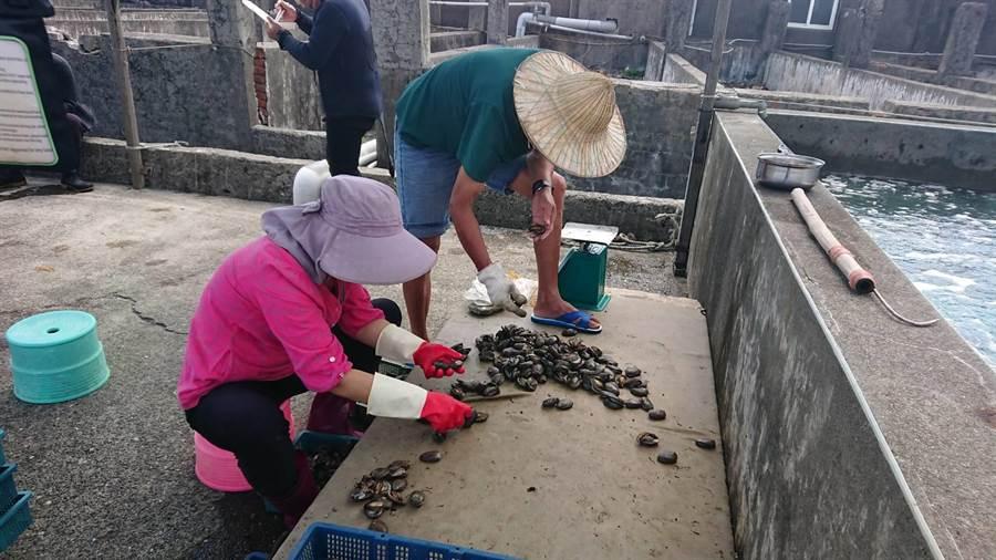 台湾贡寮鲍销量暴跌八成,当地政府建议延长大陆鲍鱼进口禁令