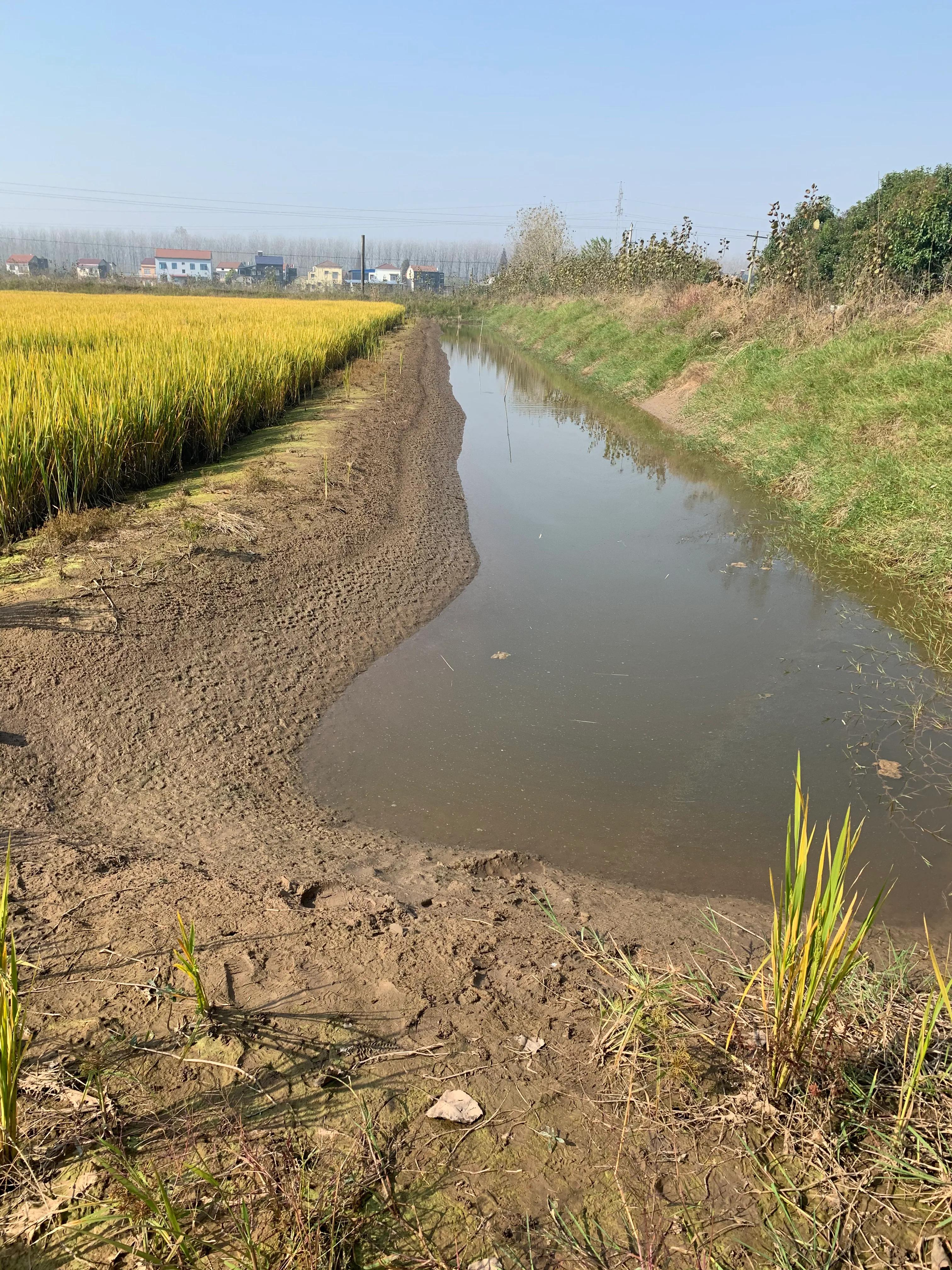 稻田挖沟对田危害有多大?5到8年才能恢复原状,回填很容易塌陷