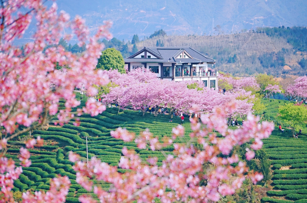 四月旅行地推�]!10���情��意目的地,�@才是春天�去的地方