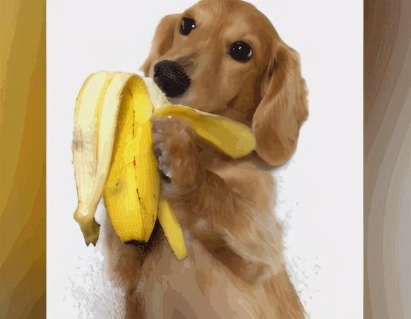 资深养狗:除了狗粮,多给狗吃这7种食物会更好