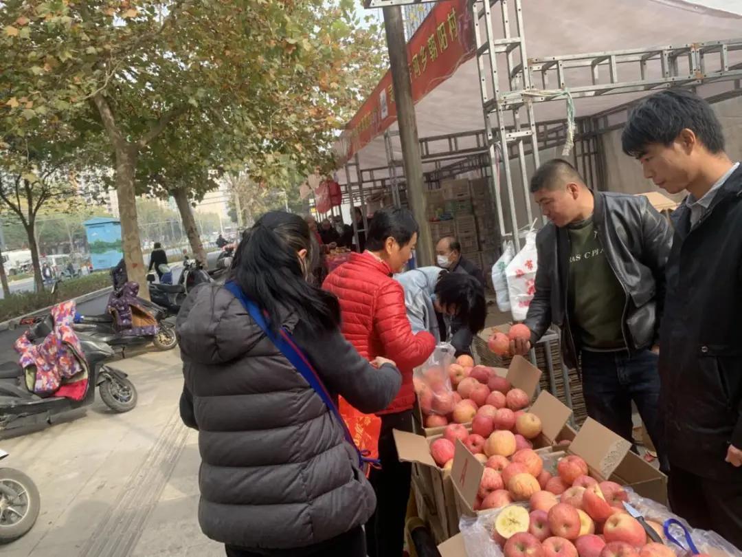 15天42.85万斤,搭消费扶贫快车,灵宝苹果郑州销量喜人