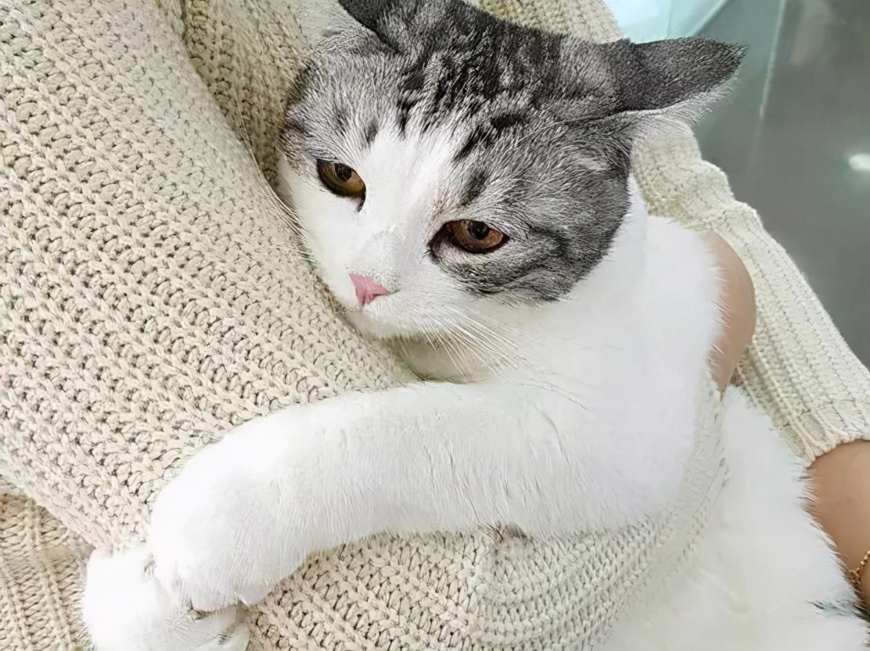 猫咪这几个行为,是在告诉你:它生病了