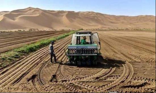 在沙漠用6年时间种出大米的年青人,当年都说异想天开,结果如何