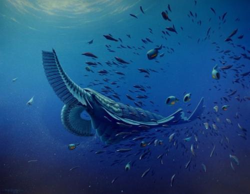 寒武纪:我这个时代生命物种大爆发的真相有很多