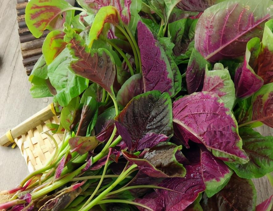 春天吃什么蔬菜好 这5种 口感鲜嫩营养高 怎么都吃不腻
