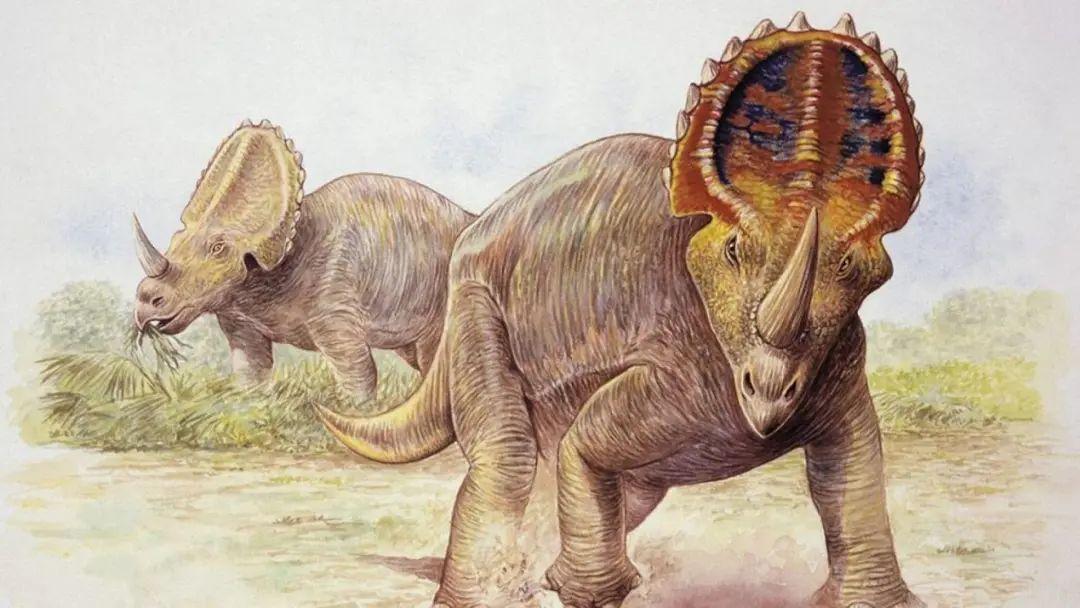 恐龙也会得癌症?