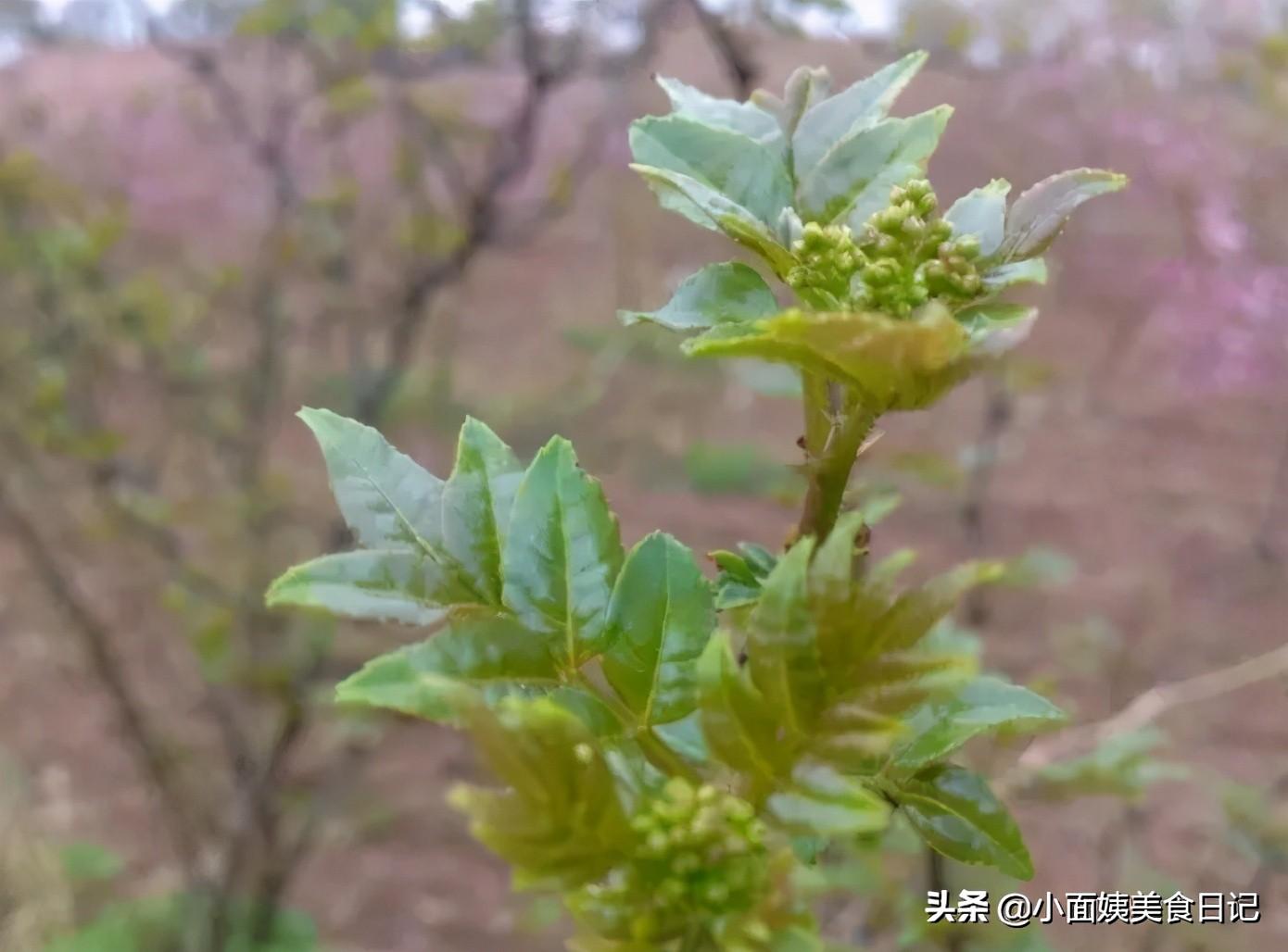 阳春三月,这6样春菜记得吃,季节性强,早吃早尝鲜,健康过春天 美食做法 第6张