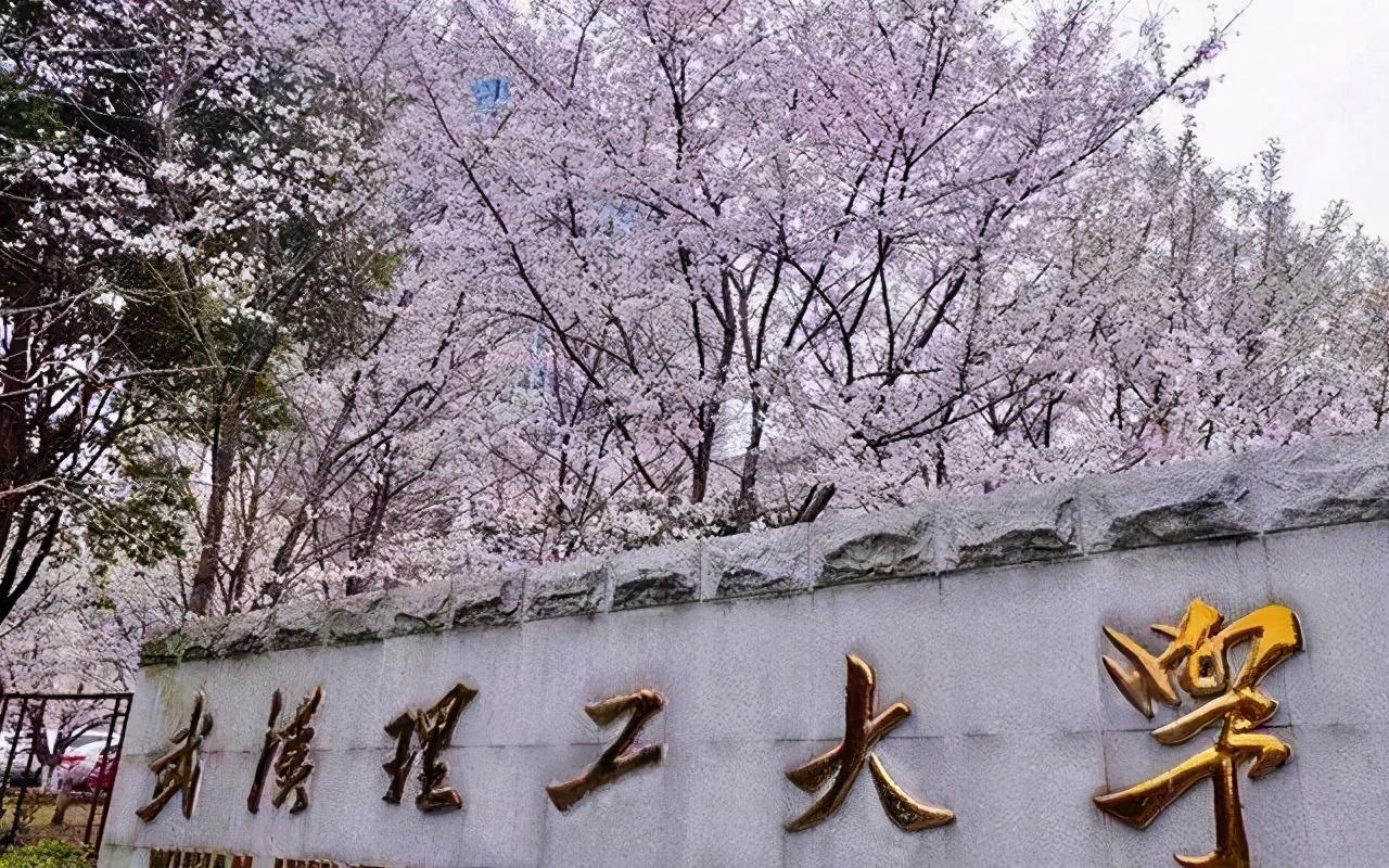 干得漂亮 武汉理工大学取消王攀的硕士研究生招生资格