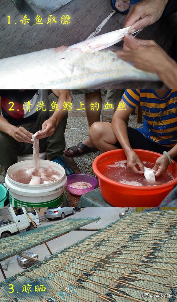 鱼胶百科:几月份吃鱼胶***?说说海边的鱼胶