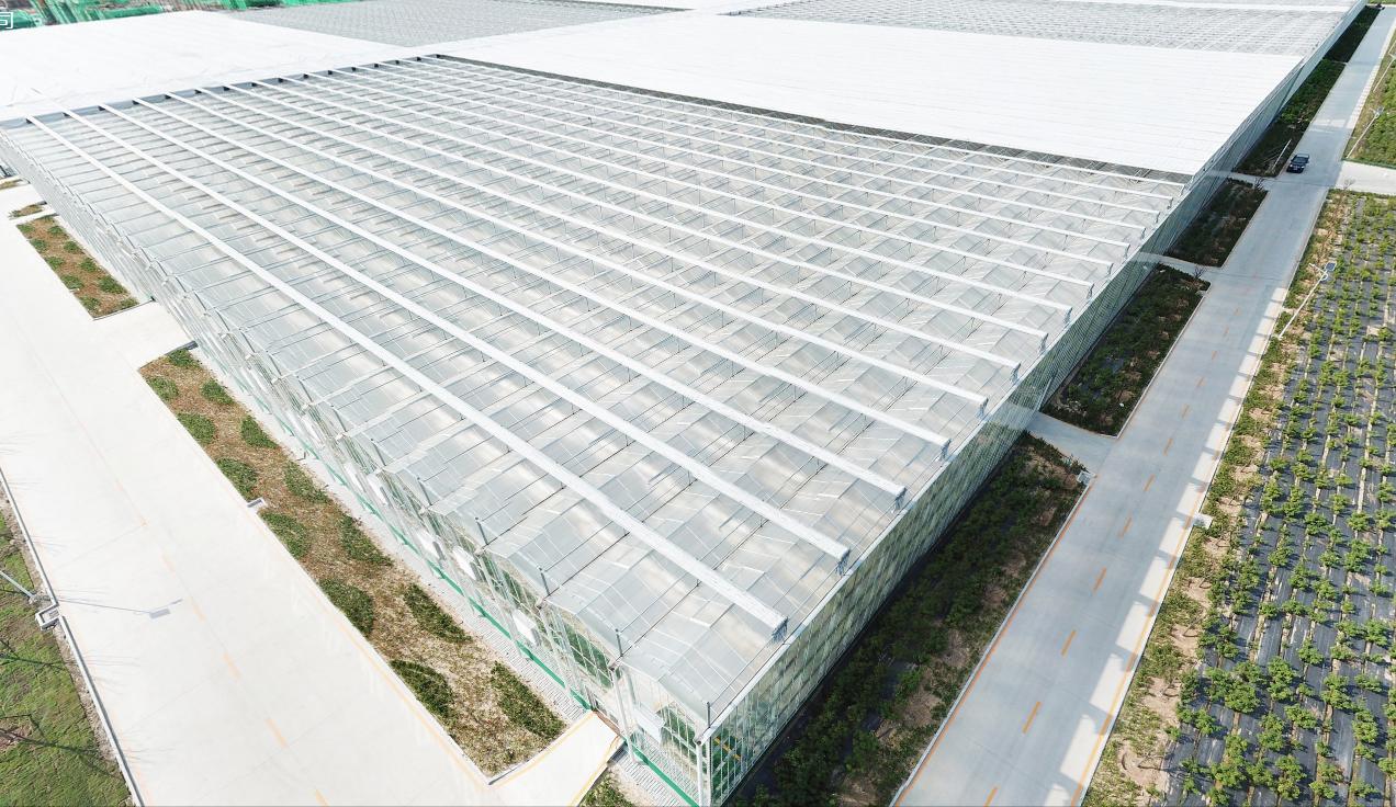 什么是智能温室大棚?智能温室大棚的主要调节功能有哪些