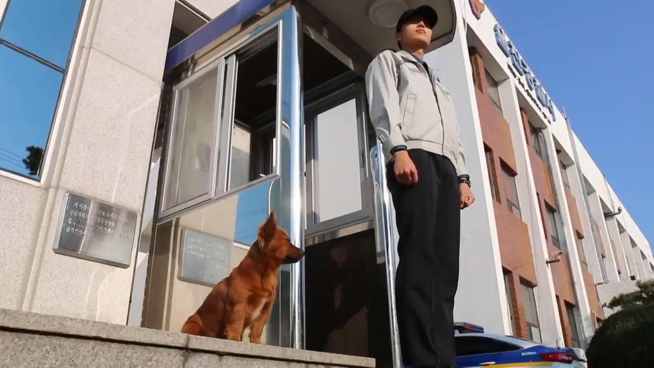 流浪狗为了报恩,竟然意外获得警局的工作,还养活了自己的孩子