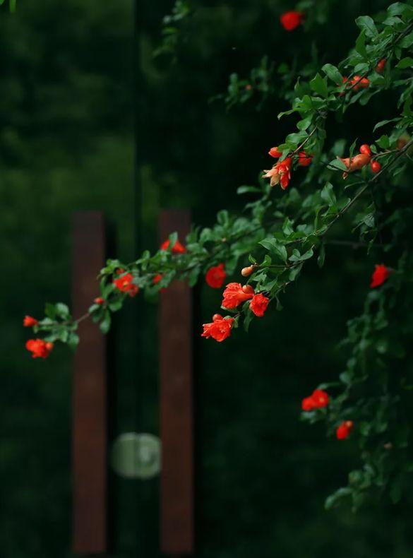 人间最美是相思 几首情词 几首情诗-第20张图片-诗句网