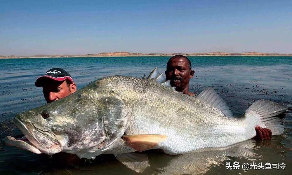 """維多利亞湖的""""哭泣"""",""""隆背金剛""""把200多種魚類,吃滅絕了"""