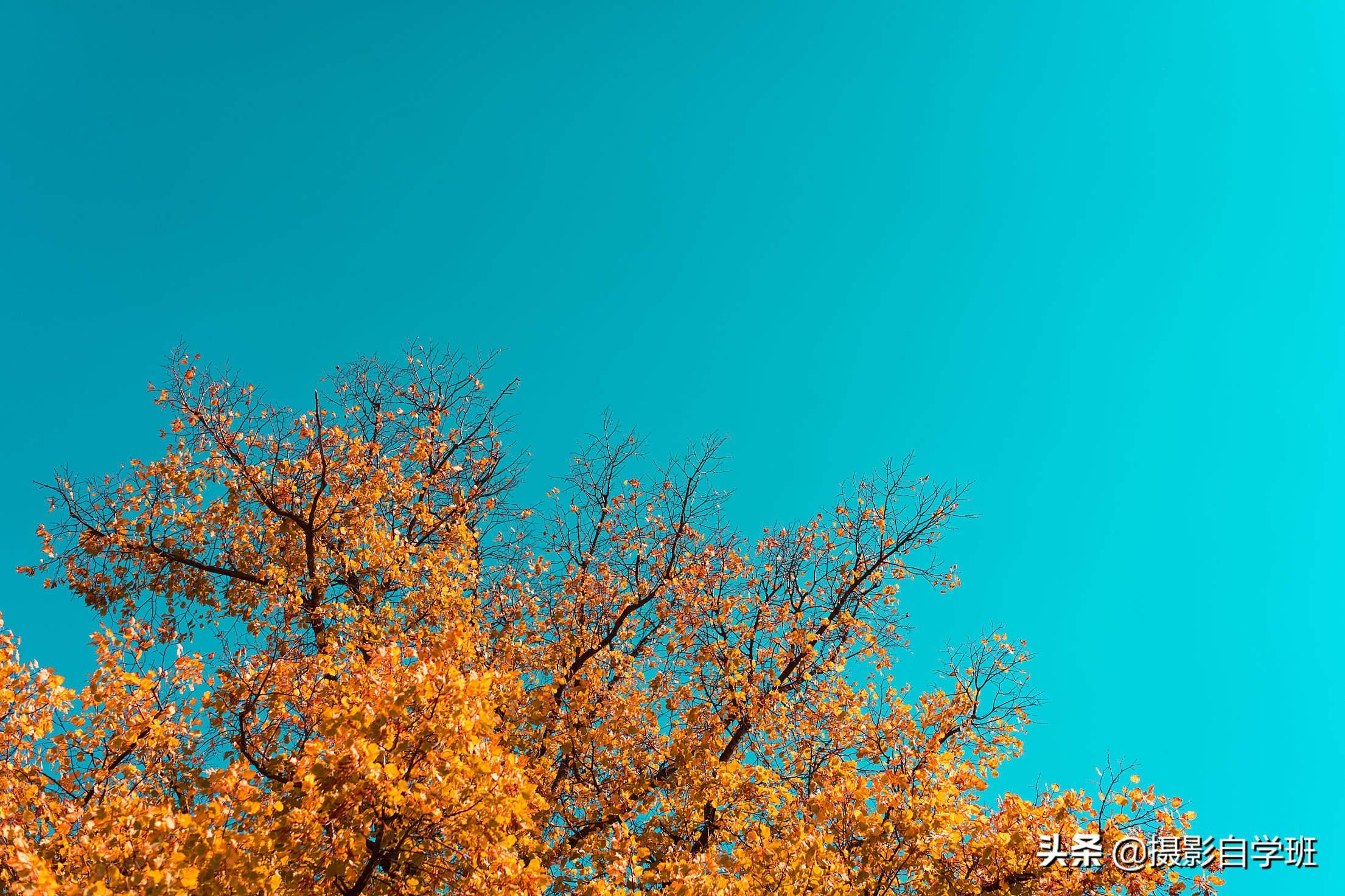 拍秋天这篇教程就够啦!看9大秋天风光摄影技巧,新手不再拍废片