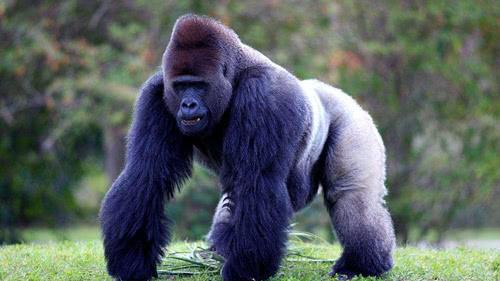 陆地上最凶猛的10大动物排行榜(上)